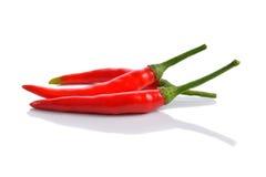 Κόκκινο πιπέρι τσίλι Στοκ Φωτογραφία