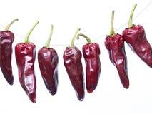 Κόκκινο πιπέρι Στοκ Εικόνα