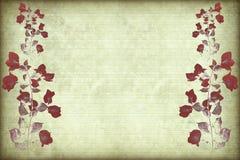 κόκκινο πλαισίων κλάδων bougainv Στοκ Φωτογραφίες