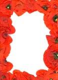 κόκκινο πλαισίων λουλουδιών Στοκ Φωτογραφίες