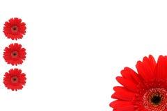 κόκκινο πλαισίων λουλουδιών Στοκ εικόνα με δικαίωμα ελεύθερης χρήσης