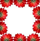 κόκκινο πλαισίων λουλο Στοκ Φωτογραφίες