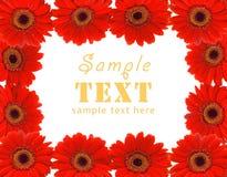 κόκκινο πλαισίων λουλο Στοκ φωτογραφία με δικαίωμα ελεύθερης χρήσης
