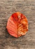 Κόκκινο πορτοκαλί φύλλωμα φθινοπώρου, κόκκινο φύλλο με τη βρώμικη σύσταση στο woode Στοκ φωτογραφία με δικαίωμα ελεύθερης χρήσης
