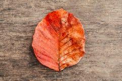 Κόκκινο πορτοκαλί φύλλωμα φθινοπώρου, κόκκινο φύλλο με τη βρώμικη σύσταση στο woode Στοκ Εικόνες