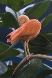 κόκκινο πουλιών Στοκ φωτογραφία με δικαίωμα ελεύθερης χρήσης