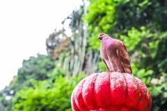 Κόκκινο πουλί στη σπηλιά Buta Στοκ Φωτογραφίες