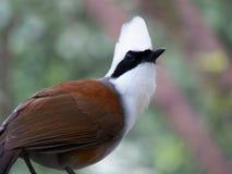 Κόκκινο πουλί Στοκ φωτογραφίες με δικαίωμα ελεύθερης χρήσης
