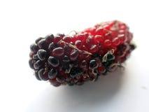 Κόκκινο που ωριμάζει τη φρέσκια κινηματογράφηση σε πρώτο πλάνο φρούτων μουριών Στοκ εικόνα με δικαίωμα ελεύθερης χρήσης