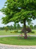 Κόκκινο ποδήλατο κάτω από τη βαλανιδιά στοκ εικόνες με δικαίωμα ελεύθερης χρήσης