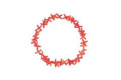 Κόκκινο πλαίσιο λουλουδιών κύκλων των λουλουδιών ixora Στοκ Φωτογραφία