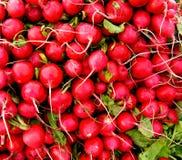 κόκκινο ραδικιών Στοκ φωτογραφίες με δικαίωμα ελεύθερης χρήσης