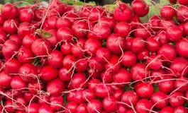 κόκκινο ραδικιών Στοκ Εικόνες