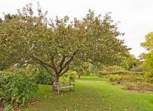 κόκκινο ρηχό δέντρο ανασκόπησης μήλων Στοκ Εικόνες