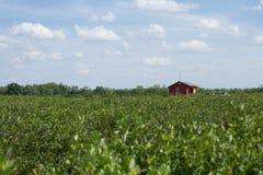 Κόκκινο σπίτι που στέκεται στο πράσινο πεδίο στοκ εικόνα με δικαίωμα ελεύθερης χρήσης