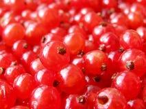 κόκκινο σταφίδων μούρων Στοκ εικόνα με δικαίωμα ελεύθερης χρήσης
