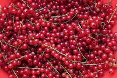 κόκκινο σταφίδων Στοκ εικόνα με δικαίωμα ελεύθερης χρήσης