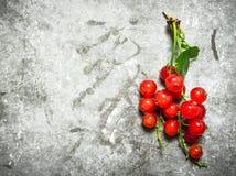 κόκκινο σταφίδων κλάδων Στο υπόβαθρο πετρών Στοκ εικόνες με δικαίωμα ελεύθερης χρήσης