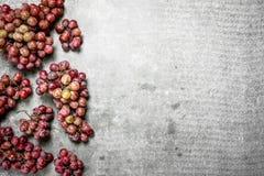 κόκκινο σταφυλιών δεσμών Στοκ φωτογραφίες με δικαίωμα ελεύθερης χρήσης