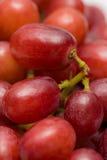 κόκκινο σταφυλιών Μαλακός στενός επάνω των juicy υγιών φρούτων πρόχειρων φαγητών Στοκ Φωτογραφίες