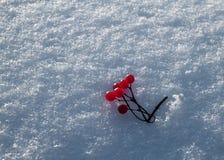 Κόκκινο στο λευκό Στοκ εικόνες με δικαίωμα ελεύθερης χρήσης