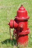 Κόκκινο στόμιο υδροληψίας πυρκαγιάς στη χλόη Στοκ Εικόνα