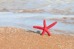 κόκκινο ταξίδι αστεριών συλλογής παραλιών Στοκ φωτογραφίες με δικαίωμα ελεύθερης χρήσης