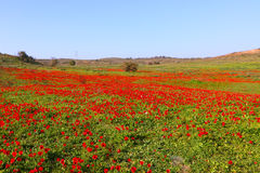 Κόκκινο τοπίο λουλουδιών Στοκ Εικόνες