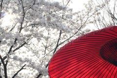 κόκκινο του Κιότο φεστιβάλ κερασιών Στοκ φωτογραφία με δικαίωμα ελεύθερης χρήσης