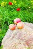 κόκκινο τρία μήλων στοκ φωτογραφία με δικαίωμα ελεύθερης χρήσης