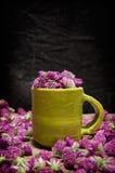 Κόκκινο τριφύλλι για το τσάι, Trifolium pratense Στοκ εικόνα με δικαίωμα ελεύθερης χρήσης