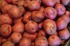 Κόκκινο υπόβαθρο καινούριων πατατών Στοκ Φωτογραφίες