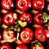 Κόκκινο υπόβαθρο της Apple.  Σωρός των κόκκινων μήλων με τα πράσινα φύλλα μέσα Στοκ Εικόνες