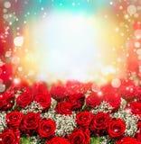 Κόκκινο υπόβαθρο τριαντάφυλλων με το φως ήλιων και bokeh Κήπος τριαντάφυλλων Στοκ Φωτογραφίες