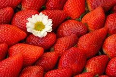 Κόκκινο υπόβαθρο φραουλών Στοκ φωτογραφία με δικαίωμα ελεύθερης χρήσης