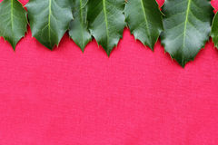 Κόκκινο υπόβαθρο Χριστουγέννων με τα ιερά φύλλα Στοκ Εικόνες