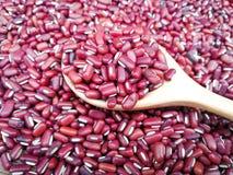 κόκκινο φασόλι υποβάθρου φασολιών μπιζελιών φασολιών καρυδιών Στοκ Εικόνα