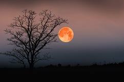 Κόκκινο φεγγάρι στη νύχτα φρίκης Στοκ φωτογραφίες με δικαίωμα ελεύθερης χρήσης