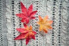 Κόκκινο φθινόπωρο φύλλων σε ένα γκρίζο πλεκτό υπόβαθρο στοκ φωτογραφία