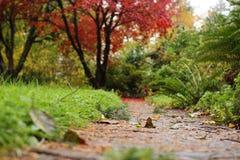 Κόκκινο φθινόπωρο Στοκ Φωτογραφίες