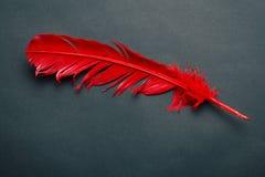 Κόκκινο φτερό Στοκ Φωτογραφία