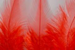 Κόκκινο φτερό Στοκ φωτογραφία με δικαίωμα ελεύθερης χρήσης