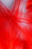 Κόκκινο φτερό Στοκ εικόνες με δικαίωμα ελεύθερης χρήσης