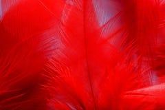 Κόκκινο φτερό Στοκ εικόνα με δικαίωμα ελεύθερης χρήσης