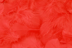 κόκκινο φτερών ανασκόπηση&sig Στοκ Εικόνα