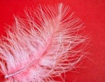 κόκκινο φτερών ανασκόπηση&sig Στοκ φωτογραφίες με δικαίωμα ελεύθερης χρήσης