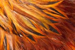 Κόκκινο φτερών κοκκόρων σύστασης Στοκ φωτογραφία με δικαίωμα ελεύθερης χρήσης