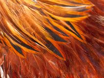 Κόκκινο φτερών κοκκόρων σύστασης Στοκ εικόνες με δικαίωμα ελεύθερης χρήσης