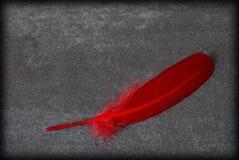 κόκκινο φτερών Στοκ εικόνα με δικαίωμα ελεύθερης χρήσης