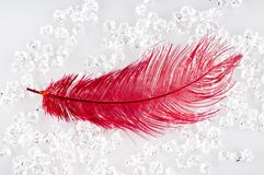 κόκκινο φτερών Στοκ Εικόνες